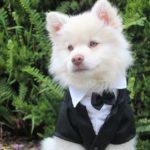 Állati esküvő, 3 szupertipp, hogyan lehetnek ők is részei a nagy napnak